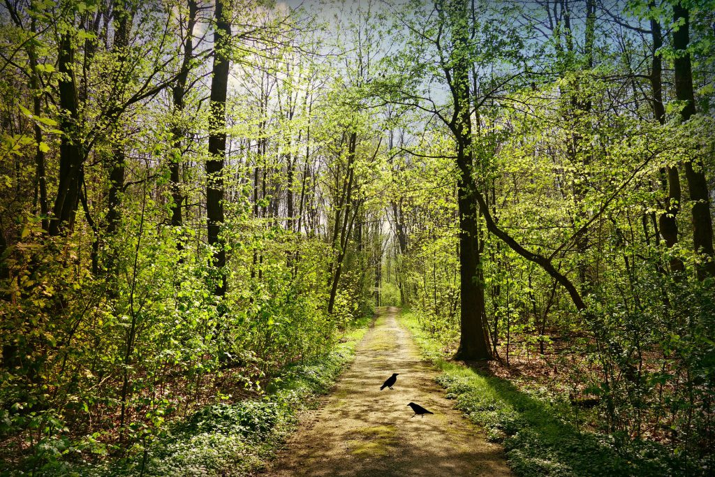 forest-path-4012437_1920