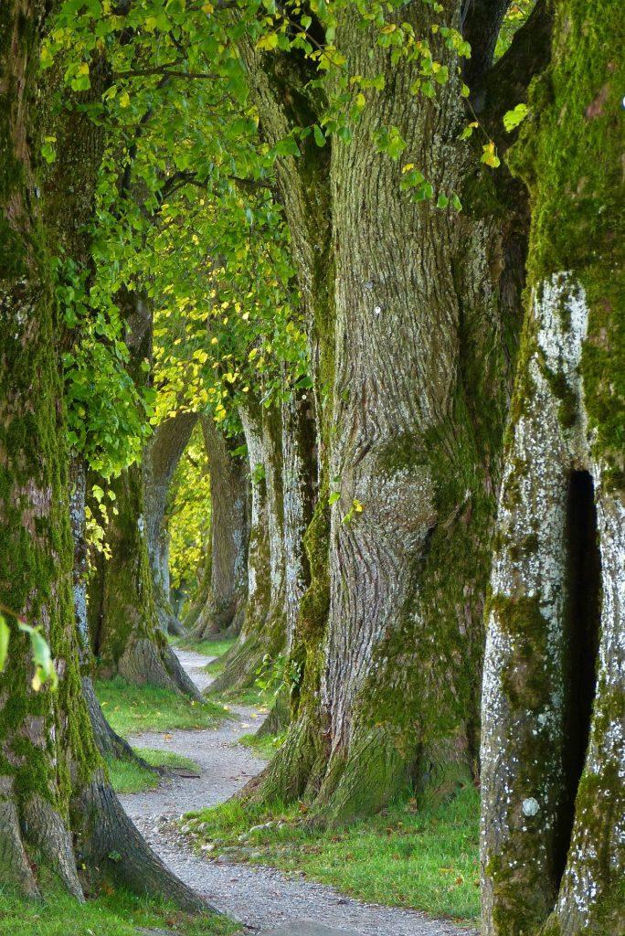 trees-2897757_1920